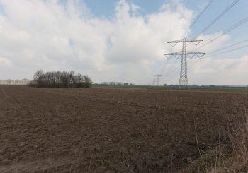 Trierveld-Koeweide-130321009